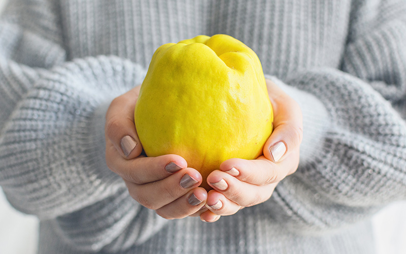 A pair of white hands in a bulky gray sweater hold a bright yellow quince cradled.
